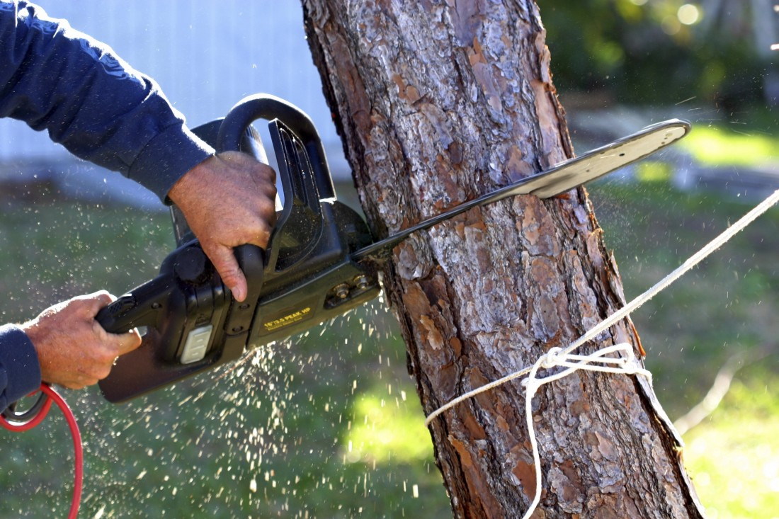 Tree Maintenance Novi MI - The Tree Corp - iStock_000000378091_Large