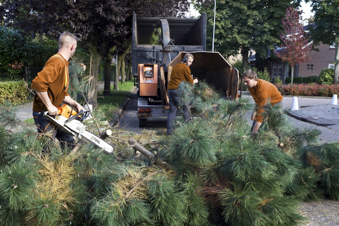 Tree Maintenance Farmington Hills MI - The Tree Corp - iStock_000021891010_Large