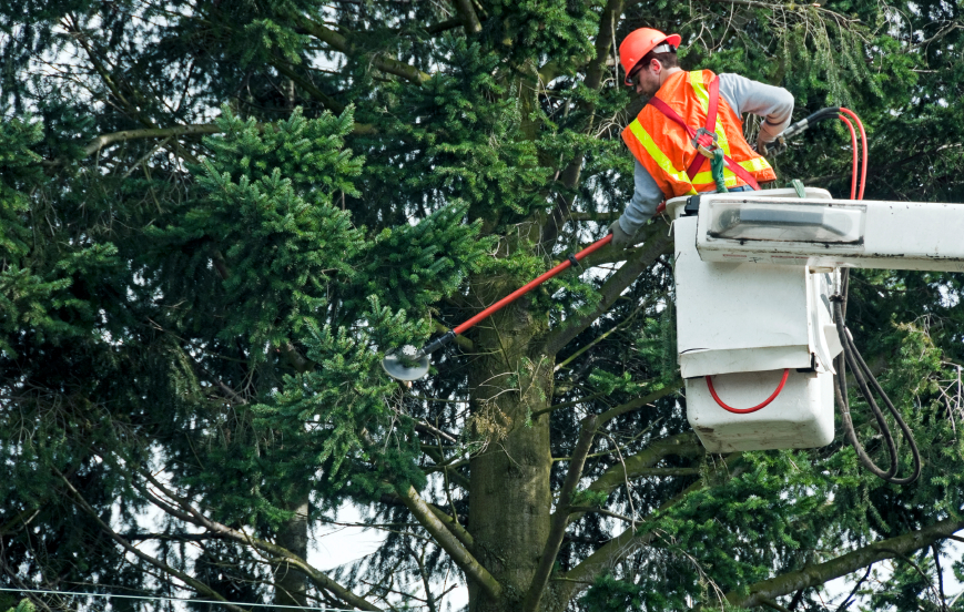 Tree Cutting Clarkston MI - The Tree Corp - iStock_000023105661_Small