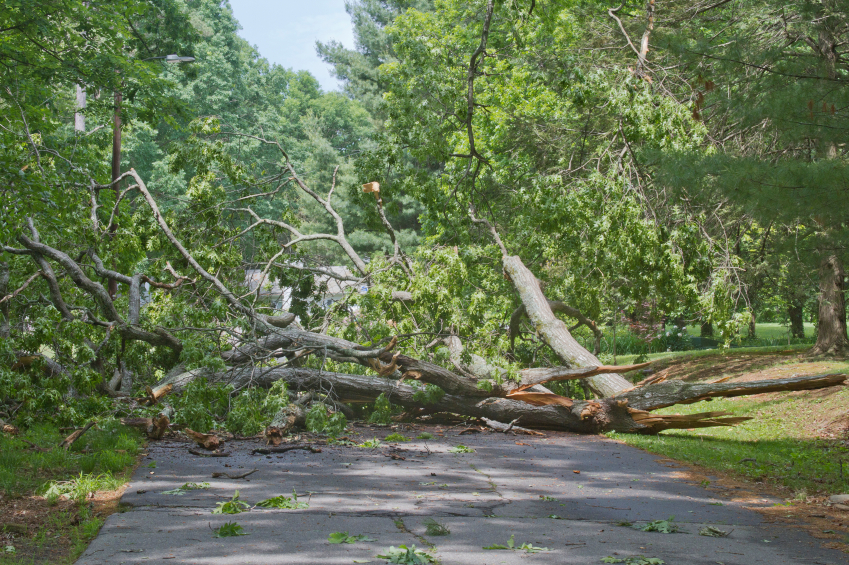 Tree Maintenance Oakland County MI - The Tree Corp - iStock_000049998800_Small