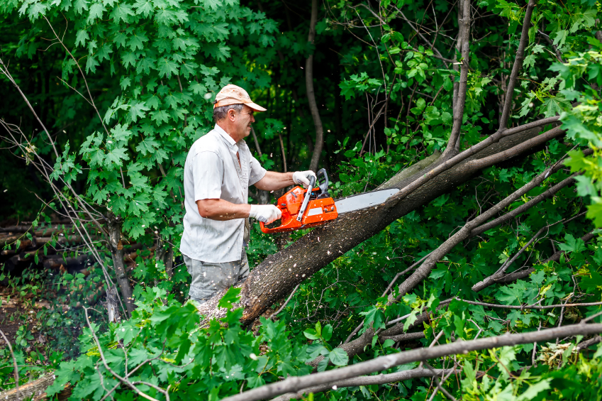 Tree Maintenance Oakland County MI - The Tree Corp - iStock_000067819775_Small