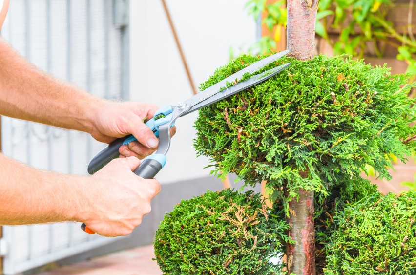 Tree Maintenance Oakland County MI - The Tree Corp - iStock_000078630561_Small