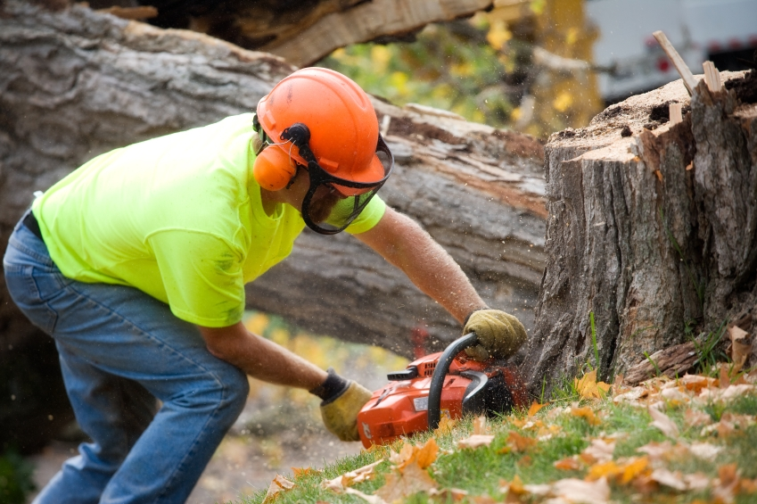 Stump Grinding Clarkston MI - The Tree Corp - tree_cutting_iStock_000015672133Small