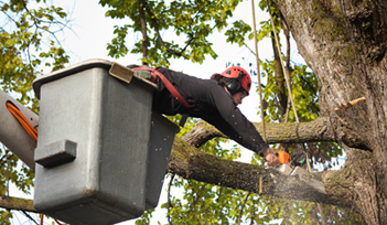 Tree Removal Services Michigan - Highland, Waterford | The Tree Corp. - home