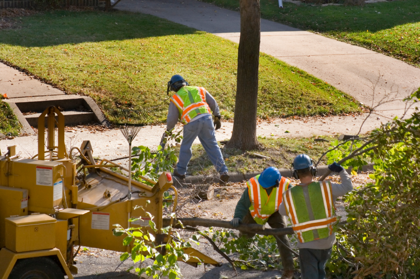 Tree Removal & Stump Grinding Highland, MI | The Tree Corp. - tree_work_iStock_000002339210Small
